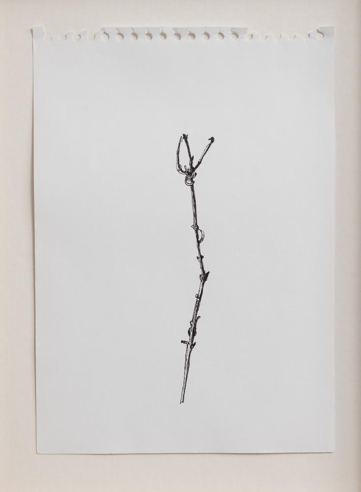 Plant Drawings | 2012 | רישומי צומח