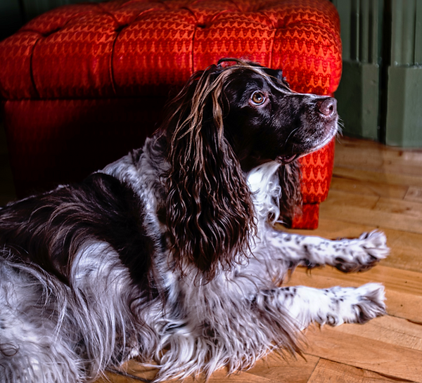 Upholstery, modern and traditional crafts, Glasgow