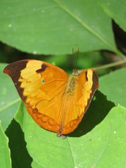 borboleta amarela.jpg