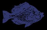 Esboço da solha dos peixes
