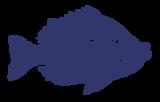 Bot Sketch Fish