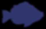 Flounder Fish Sketch