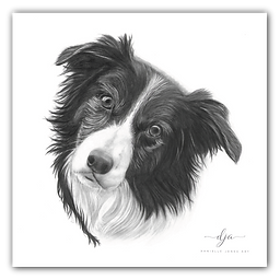 border collie pet dog portrait commission graphite pencil
