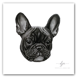 french bulldog pet dog graphite pencil drawing commission