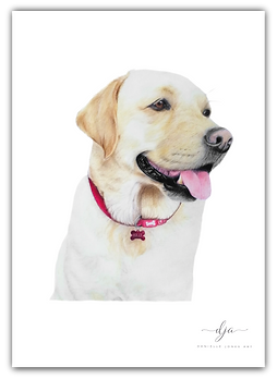 golden labrador retriever dog pet portrait colour pencil drawing commission