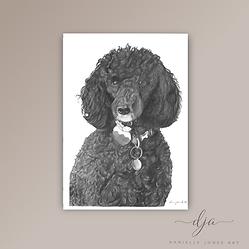 Poodle dog portrait commission in graphi