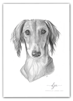 Saluki persian greyhound dog pet portrait graphite pencil drawing commission