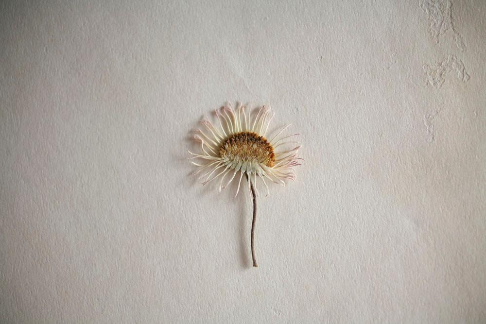 16-Einat Arif-Galanti-dried flower.jpg