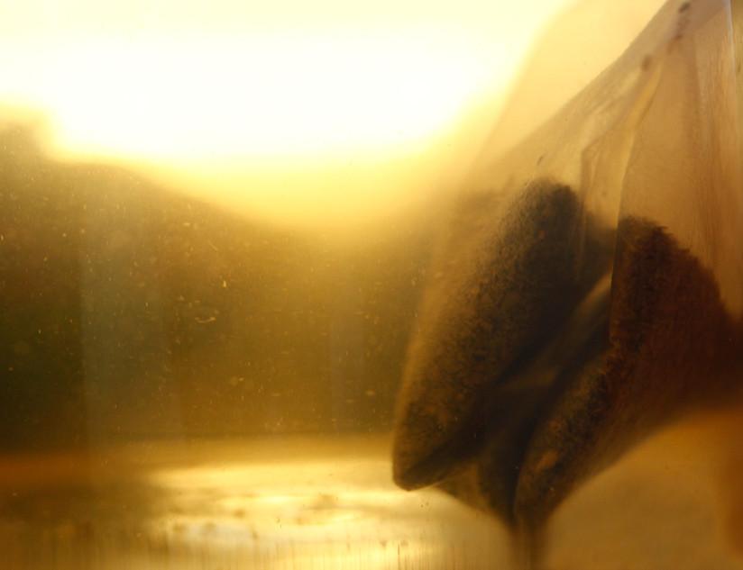 Einat Arif Galanti-Tea2-2012.jpg