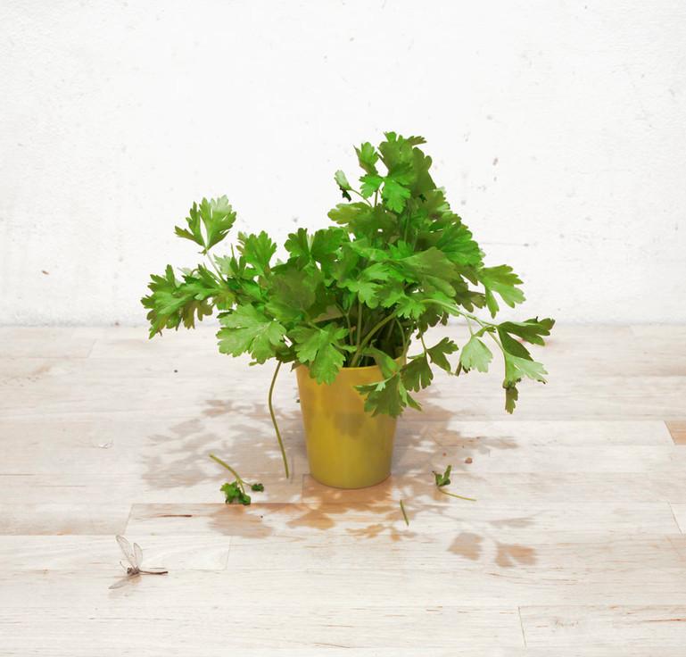 17-Einat Arif-Galanti-parsley n dragonfl