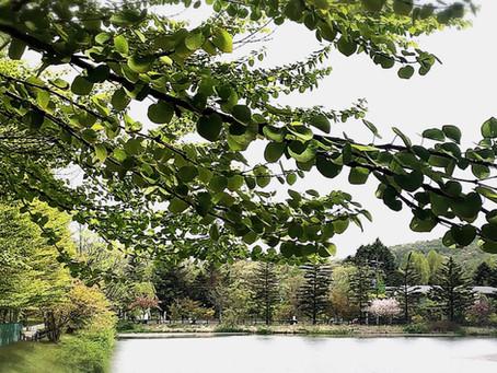 5月号【軽井沢南ヶ丘パッシブハウス】レター🌿