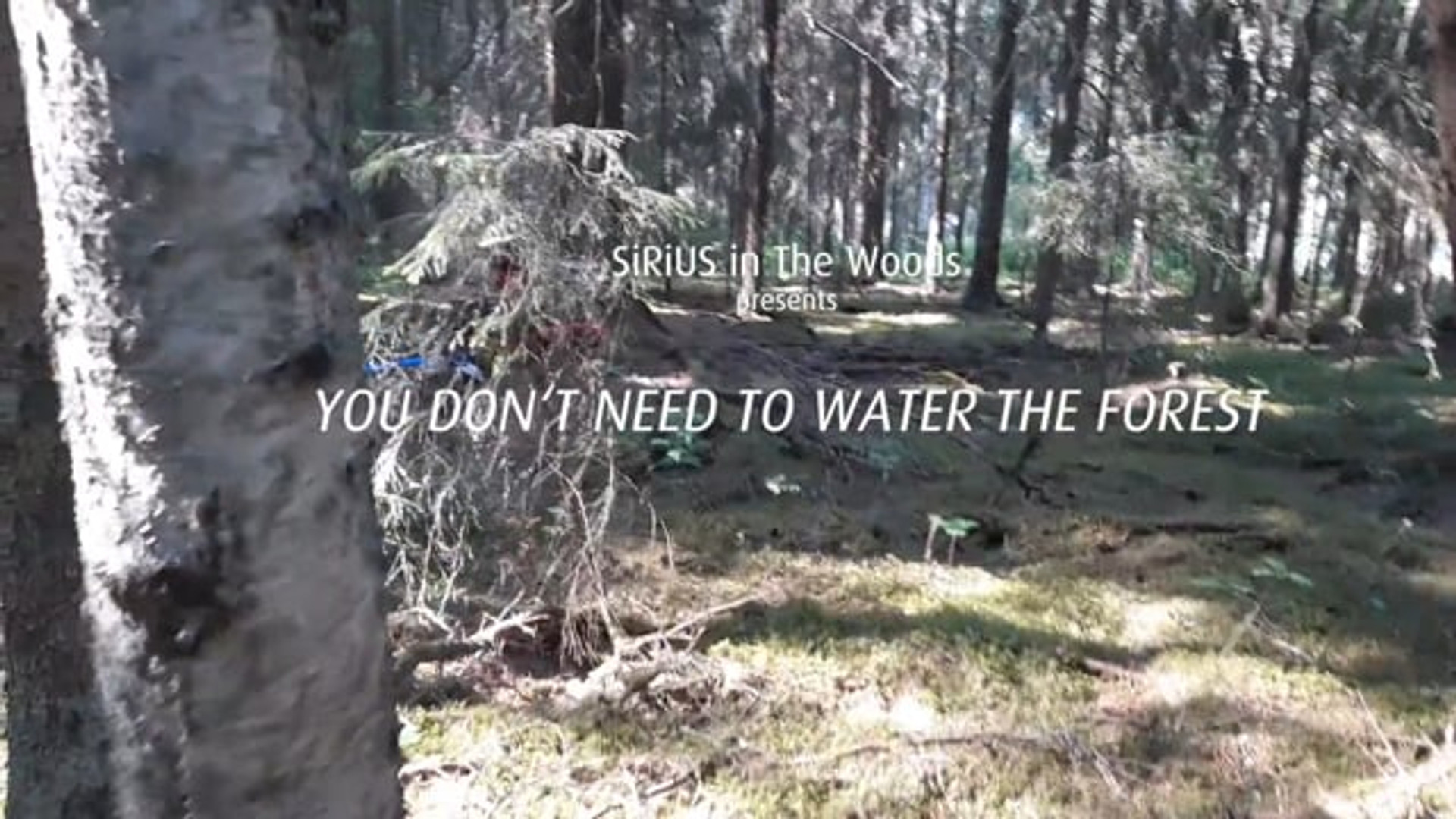 You Don´t Need To Water The Forest