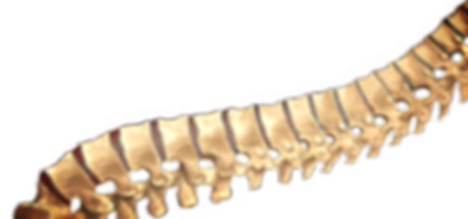 Image of a human spine.