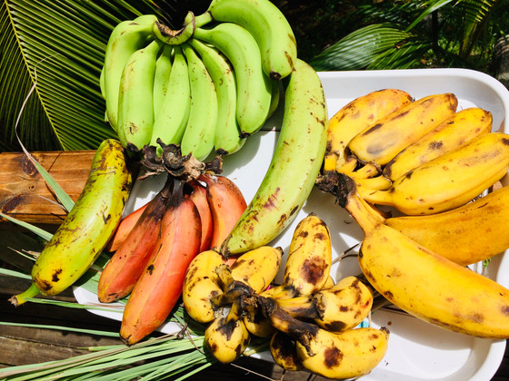 Know your bananas: 30 Varieties grown in the Seychelles