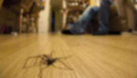 spider on floor.jpg