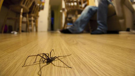 spider on floor.jpg