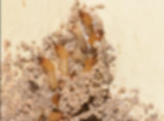 sub-termite-workers-soldiers.jpg