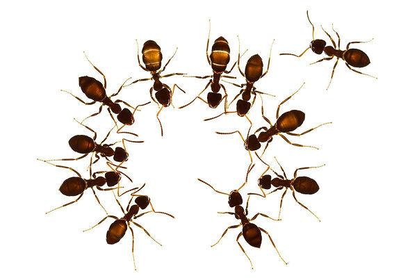 i hate ants in chicago.jpg