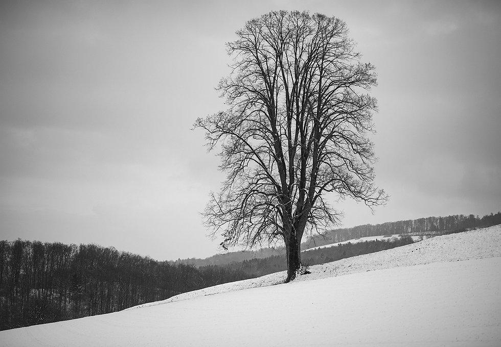 Baum_Low.jpg