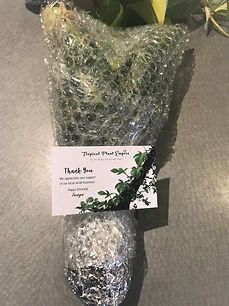 how to pack plant mail Tropical Plant Em
