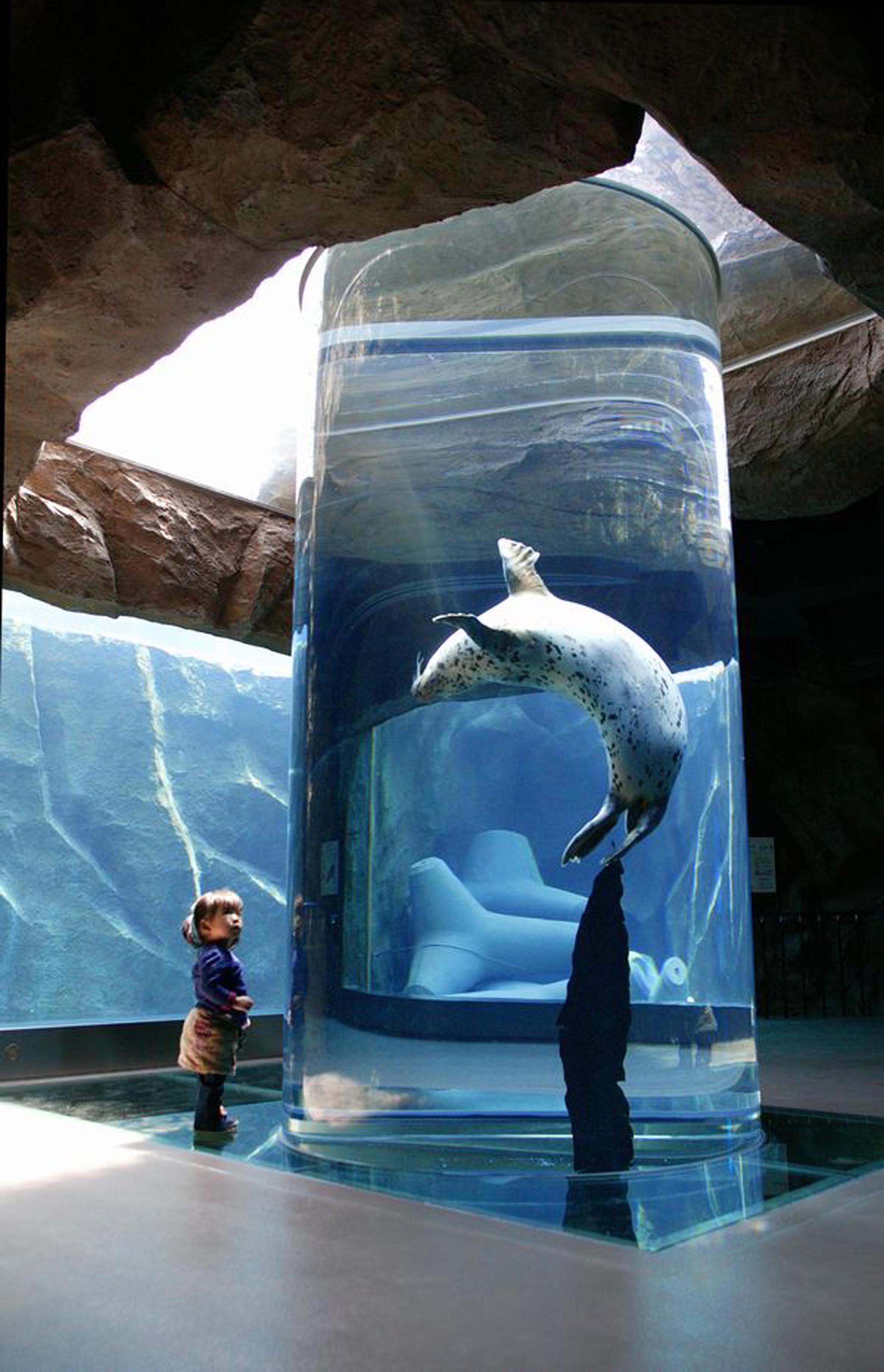 Asahikawa Asahiyama Zoo 7
