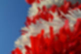 rood wit.jpg