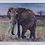 Thumbnail: Great Tusker - Briony Howell (mounted print)