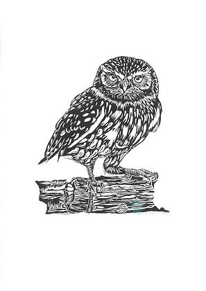Little Owl - Deborah Vass (mounted)