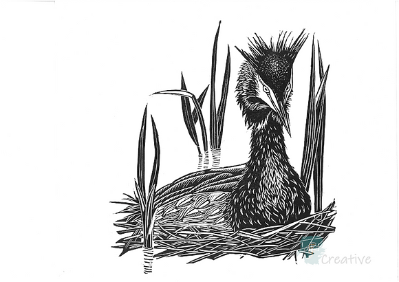 Square Art Card: The Gentle Sentinel - Great Crested Grebe by Deborah Vass