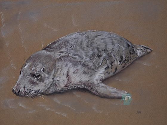 Seal - Susie Bee (framed)