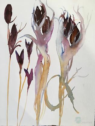 Iris Seedheads - Helen Clarke (mounted)