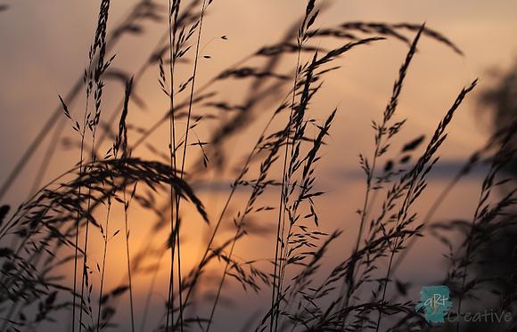 Sunset at Portholme - Robert Fry