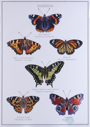 Butterflies - Briony Howell (mounted print)