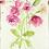 Thumbnail: Roses - Helen Clarke (mounted)