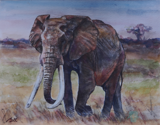Great Tusker - Briony Howell (mounted print)