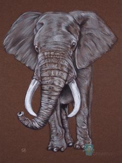 Elephant - SF