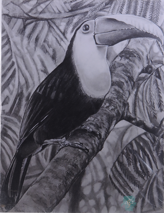 Toucan - Briony Howell (mounted print)