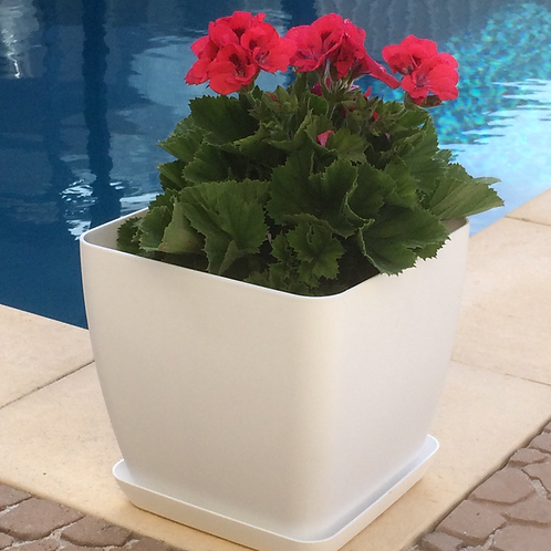 Begonia Square White pot and saucer 28cm