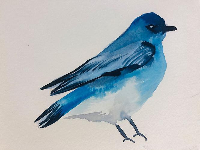 10 Birds in watercolour