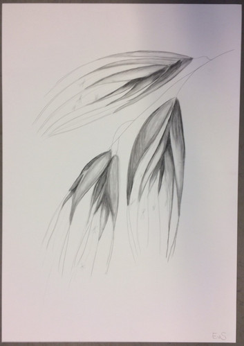 Big drawing in pencil