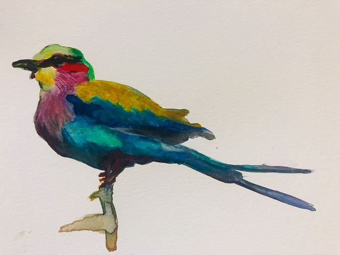 9 Birds in watercolour