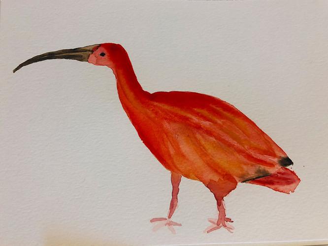 11 Birds in watercolour