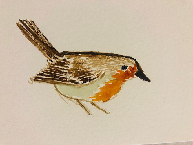 5 Birds in watercolour