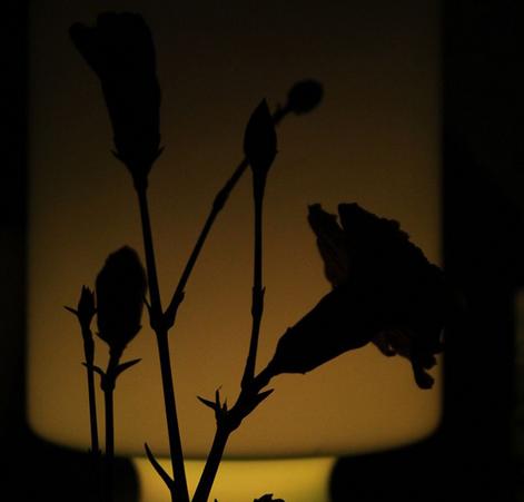Tess Engelander - Silhouet