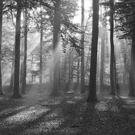 Bomen - zwart wit