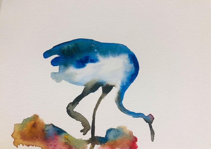 8 Birds in watercolour