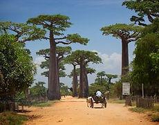 農業及香料大國-紅島 (馬達加斯加), BDL果醬的故鄉