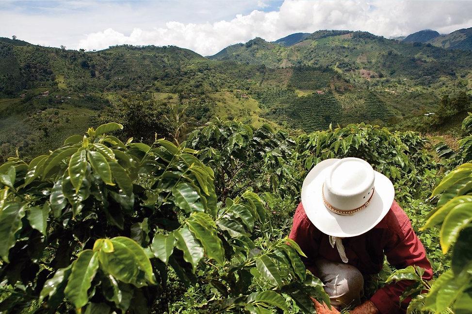 Nespresso_Colombian_farmer.jpg
