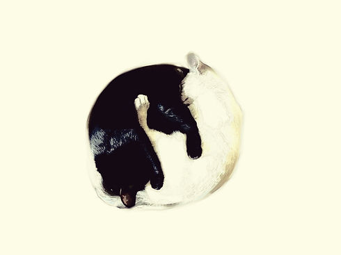 Yin_Yang Cat.jpg