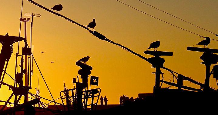 Essaouira, Gaviotas 1.jpg